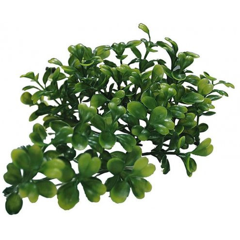 Lucky Reptile Turtle Plant Bacopa