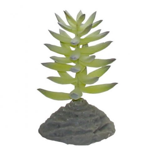 Lucky Reptile Fat Plant Succulent approx. 14cm