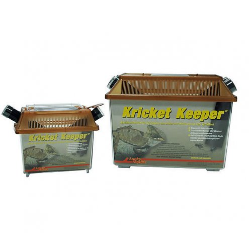 Lucky Reptile Kricket Keeper large