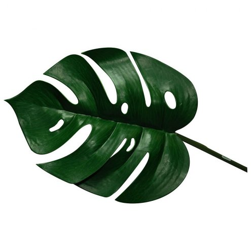 Lucky Reptile Monstera Leaf (3-pack) approx. 25cm