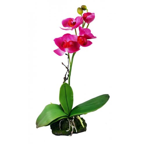 Lucky Reptile Upright Orchid Pink 30cm