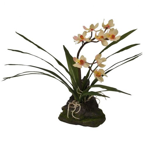 Lucky Reptile Upright Orchid White 23cm