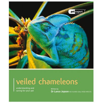 Pet Expert Veiled Chameleons