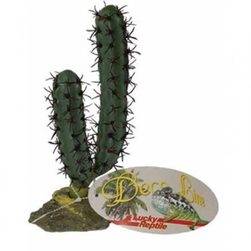 Lucky Reptile Finger Cactus approx. 20cm
