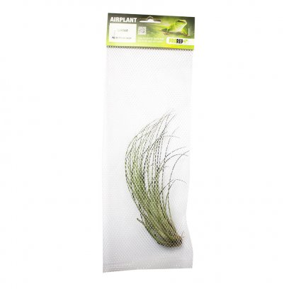 ProRep Air Plant Large Juncea
