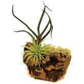 ProRep Airplant Cork Display Small