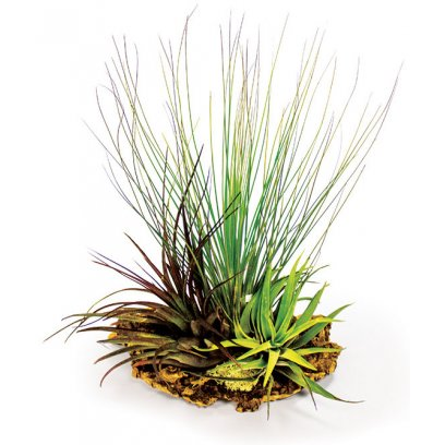 ProRep Airplant Cork Display Large