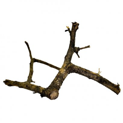 ProRep Black Acacia Branch Small