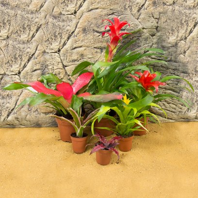 Live Plant Mini Bromeliad collection - 6 Assorted Plants