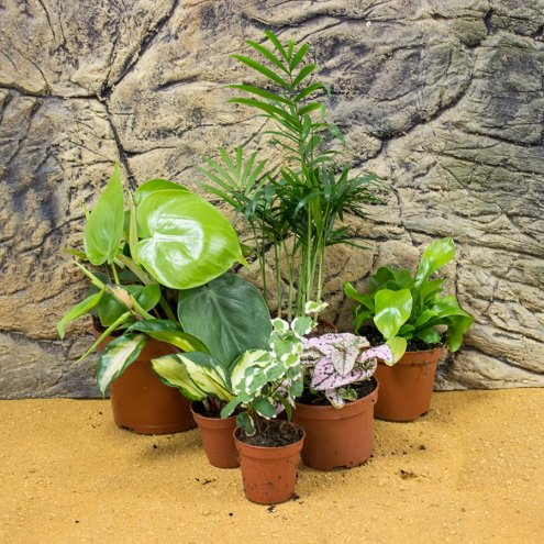 Live Plant Mini Jungle Collection - 6 Assorted Plants