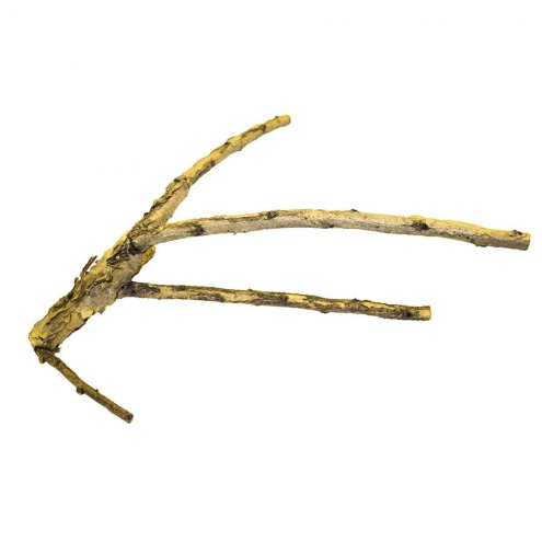 ProRep White Acacia Branch Medium