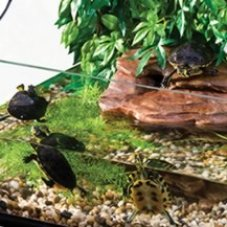 Turtle Tanks