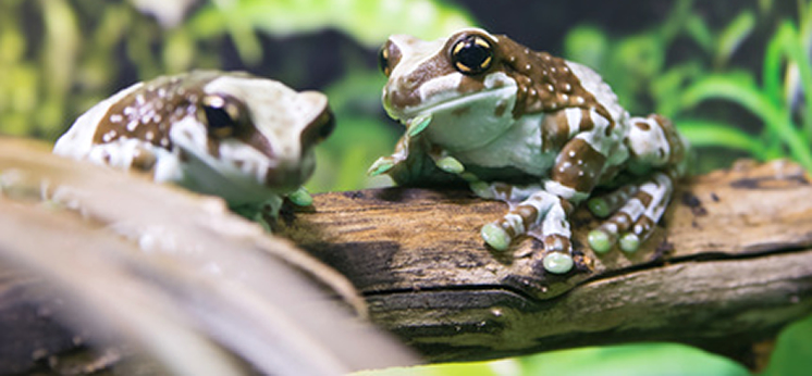 Amphibian Decor category