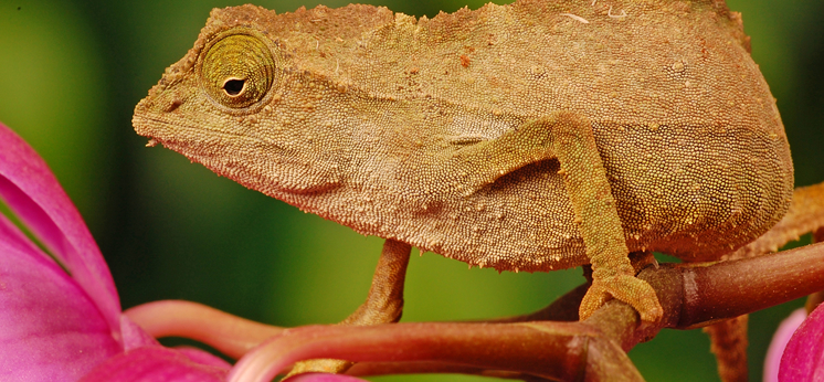 Chameleon Decor category