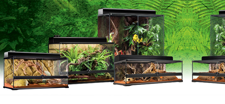 Lizard Terrariums category