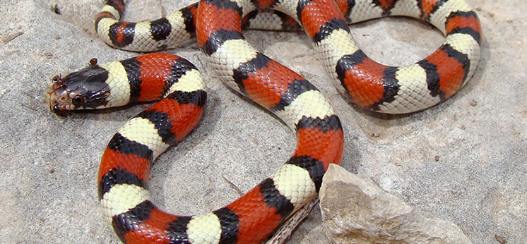 Milk Snake Substrates category