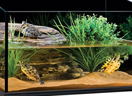 Buy Great Value Aquatic Turtle Enclosures | Northampton ...