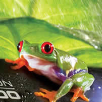 amphibian rain makers