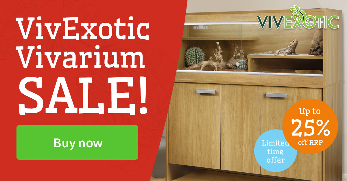 vivexotic special offers