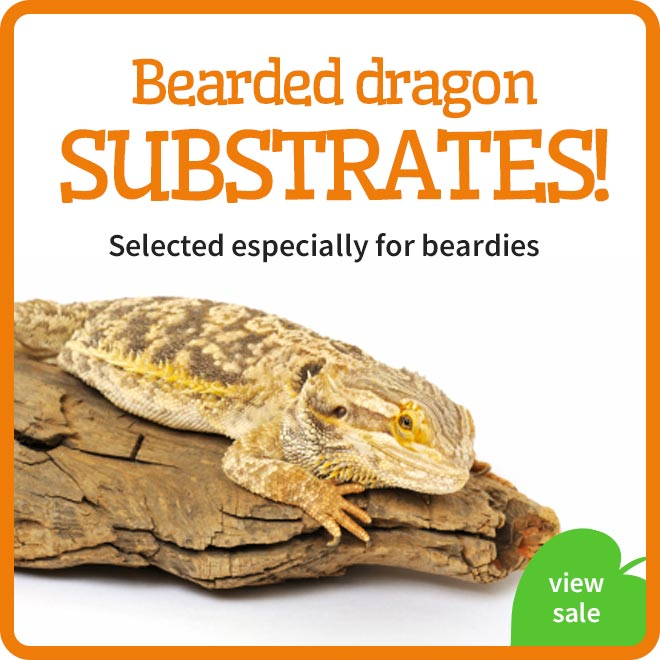 bearded dragon substrates