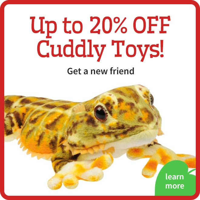 Cuddly Toy Offer
