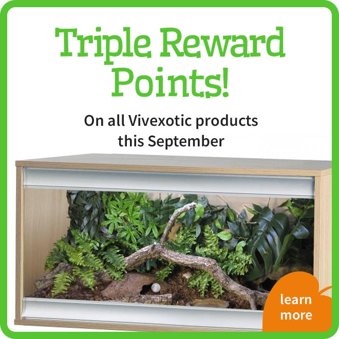 Triple Rewards Points Offer