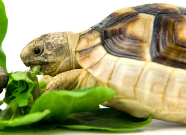Tortoises Live Food Vivariums The Reptile Centre